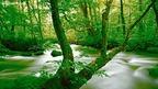 日頃の疲れた心を癒す森林のやさしい緑りの風景が心をリラックスさせます。