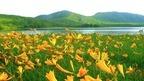 福島の絶景・雄国沼に広がるニッコウキスゲが圧巻
