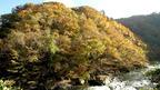 日本の紅葉絶景 岩手県 久慈渓流と小袖海岸 ~ 日本全国 紅葉狩り ~