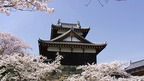 日本の桜名所 奈良県 桜百選 郡山城址 ~ 桜・お花見特集