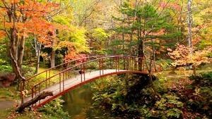 紅桜公園の色鮮やかな紅葉が見ごろ @北海道札幌市 Sapporo Benizakura Park autumnal leaves, Hokkaido