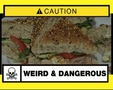 Weird & Dangerous Episode 17